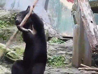 Enlace a Así surgió la inspiración para Kung Fu Panda