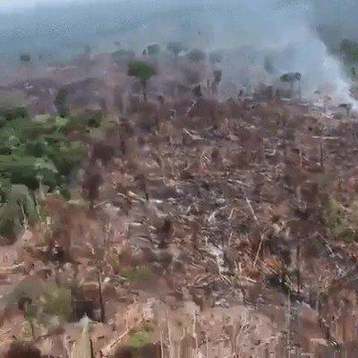 Enlace a Lo que está pasando en el amazonas es una auténtica tragedia