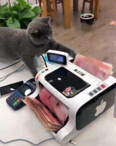 Enlace a Este gato cuenta el dinero antes de pagar la nómina a los trabajadores