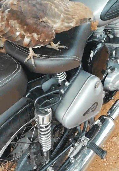 Enlace a Parece que alguien nuevo quiere subirse en mi moto