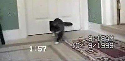 Enlace a Cariño creo que el gato ha Poke evolucionado en algo extraño