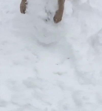 Enlace a Perros que son felices haciendo una bola de nieve