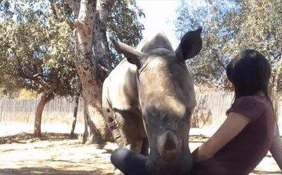 Un rinoceronte que solo quiere un poco de mimos