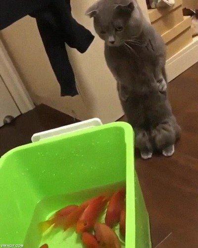 Enlace a El autocontrol de este gato es de otro mundo