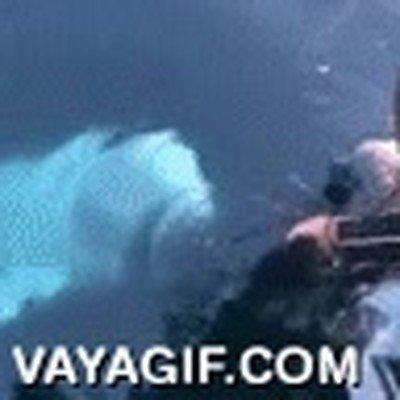 Enlace a Ballenas buenrolleras que devuelven el móvil si te cae al mar