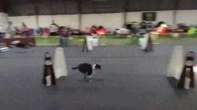 Los perros más rápidos que he visto nunca
