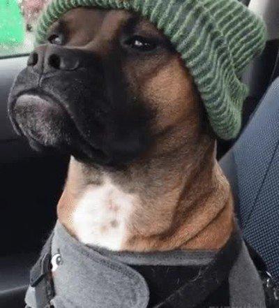 Enlace a Yo no me atrevería a decirle nada este perro por las mañanas