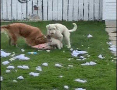 Cuando pillas a tus perros haciendo lo que no deben