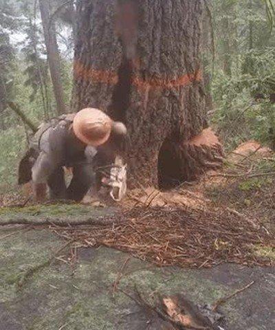 Enlace a La peor de las pesadillas para alguien que se gana la vida cortando árboles
