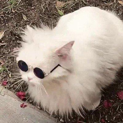 Enlace a El gato más chulo del vecindario