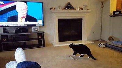 Enlace a Hasta los gatos están aterrorizados de la políticas de Trump