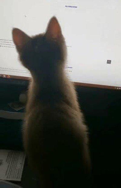 Enlace a Nada más adorable que un gato jugando con el puntero de un ratón