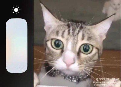 Enlace a Es una pasada ver cómo las pupilas de los gatos se expanden