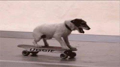 Enlace a Nunca podrías hacer lo que hace este perro sobre la tabla