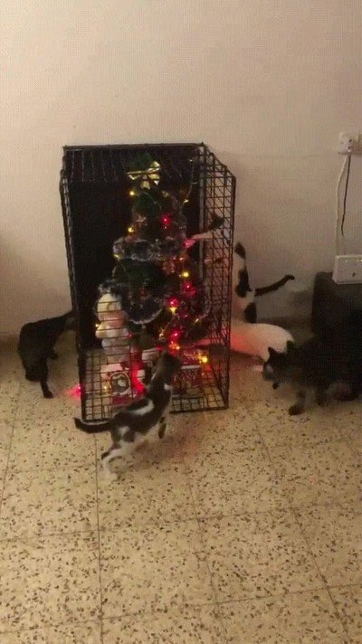Enlace a Trolleando a los gatos con el árbol de navidad de este año