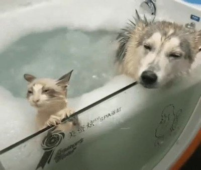 Enlace a Así me imagino a las parejas que van a pasar un fin de semana al spa