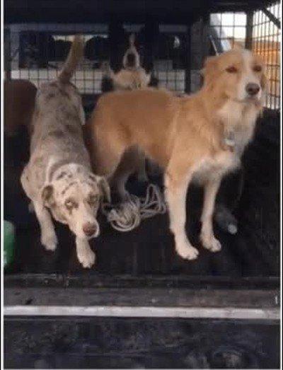 Enlace a No es coña, pensaba que estos perros no eran reales