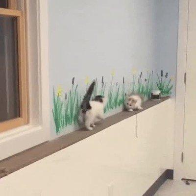 Enlace a Estos gatos han encontrado la solución perfecta para los sitios estrechos