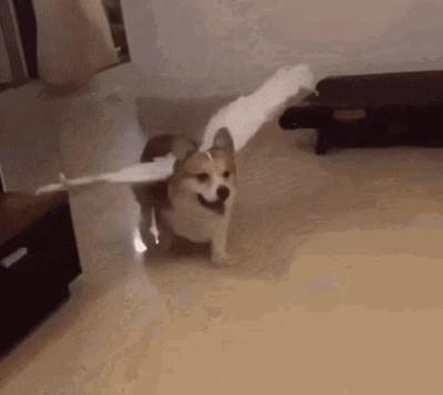 Enlace a Perros con alas que literalmente vuelan...o casi