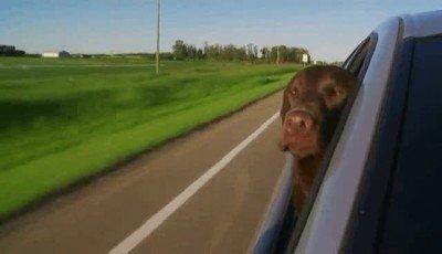 Enlace a Por eso a los perros les encanta tanto sacar la cabeza en la carretera