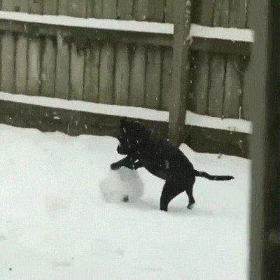 Enlace a ¿Habías visto alguna vez un perro haciendo un muñeco de nieve?