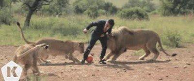 Jugando a futbol contra leones. No todo el mundo se atrevería