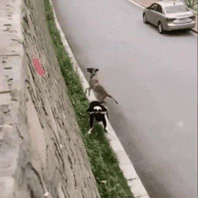 Enlace a Lo de este perro escalando es una locura