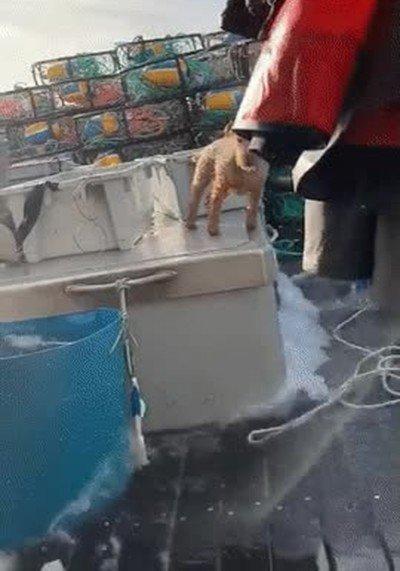 Un perrito que mantiene el equilibrio de una forma magistral