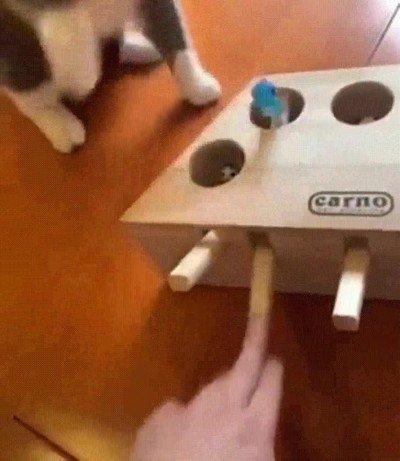 Esta caja es un trolleo constante para gatos