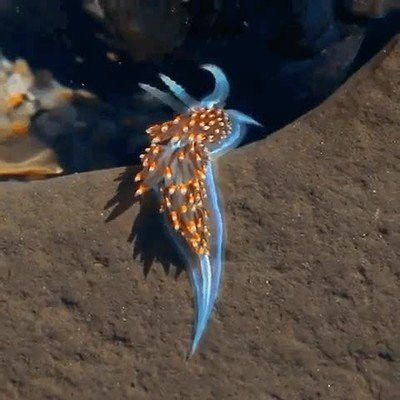 Enlace a El mar está repleto de criaturas maravillosas