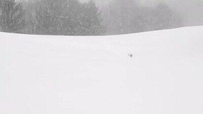 Enlace a La bestia siempre se abre camino entre la nieve
