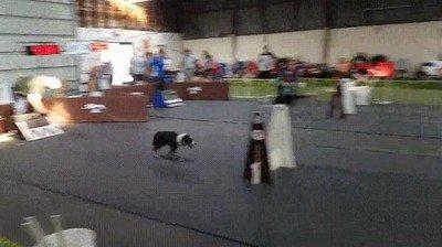 Enlace a Los perros más rápidos del mundo
