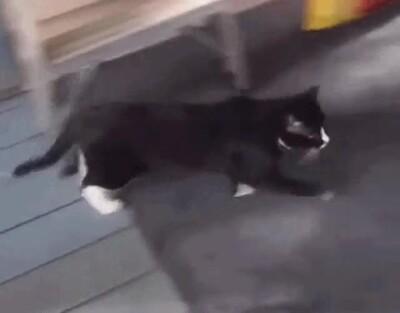 Enlace a Este gato va a tener pesadillas
