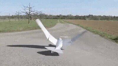 Enlace a Si lo ves de lejos te parecerá que es un pájaro de verdad