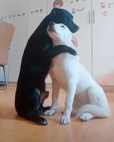 Enlace a Demostrando que también existe la amistad entre animales