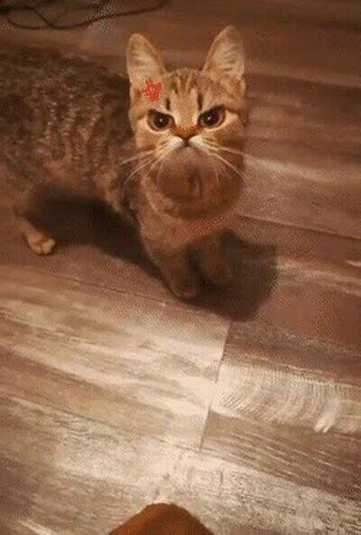 Enlace a Con este filtro el gato está siempre enfadado y es de lo más adorable