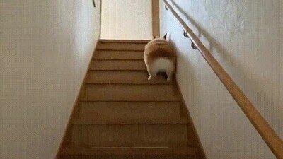 Enlace a Un perrito subiendo las escaleras de la forma más adorable