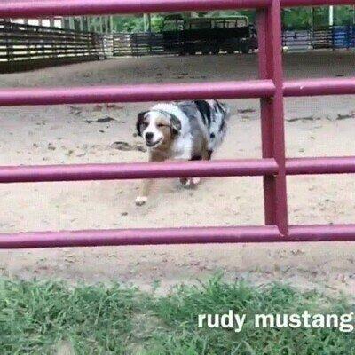 Enlace a Este perro tiene un increíble control sobre su cuerpo