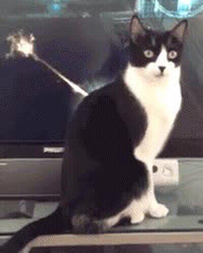 Enlace a Nunca me imaginaba que mi gato sería el jefe final de un videojuego