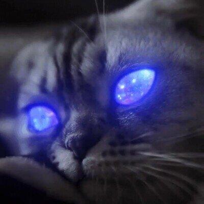 Enlace a Este gato tiene el espacio dentro de sus ojos