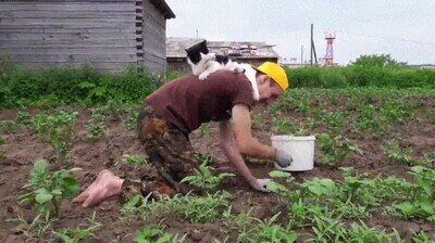 Enlace a Gatos que no quieren separarse de su humano ni en el trabajo