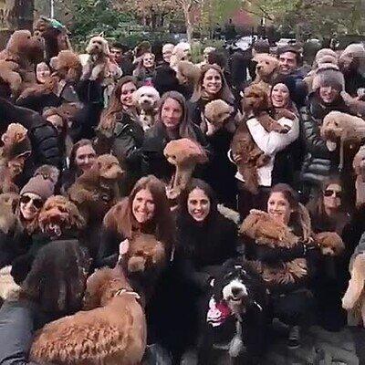 Una foto de grupo, cada uno con sus perros