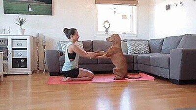 A este perro le encanta hacer yoga en casa