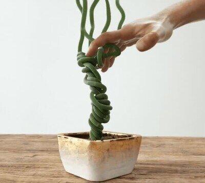 Enlace a Esta planta parece recién llegada del espacio y da mal rollo
