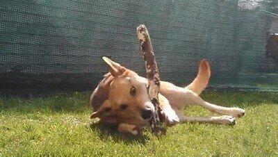 Enlace a Un perro solo necesita sol, césped y un pala ser feliz