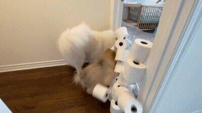 Cada día les pone a sus perros un obstáculo más difícil