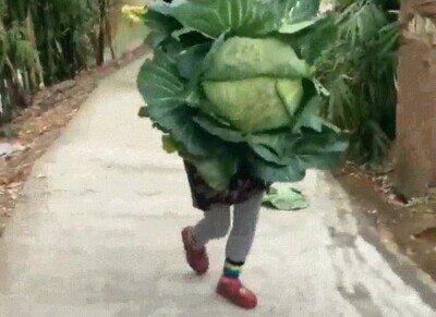 Enlace a El tamaño de las hortalizas es cada vez más grande