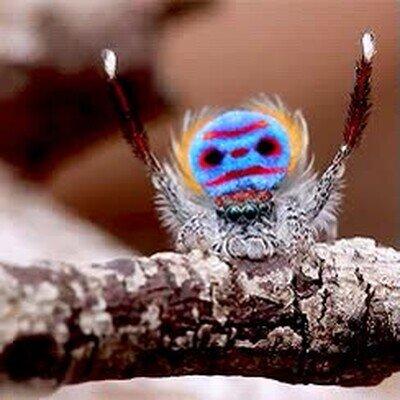 Enlace a Las arañas llamando la atención para poder ligar