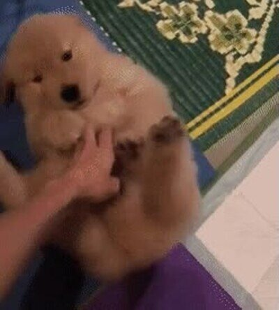 Enlace a Ojalá lograr ser tan feliz como este perrito