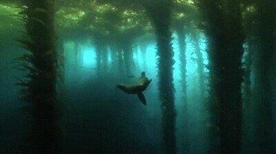 Enlace a Parece un bosque pero en realidad está debajo del agua